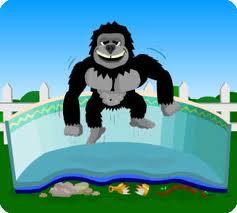 gorilla in indiana swimming pool